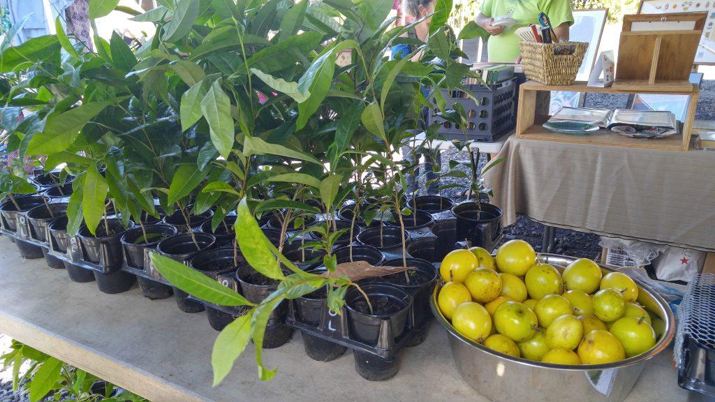 lilikoi-vines-and-fruit