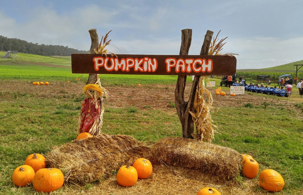 With family photo opportunities in abundance at Kohala Mountain Educational Farm on the Big Island of Hawai'i, the island's only pumpkin patch was again a big hit this year. Oct. 2016. Photo: Crystal Richard.