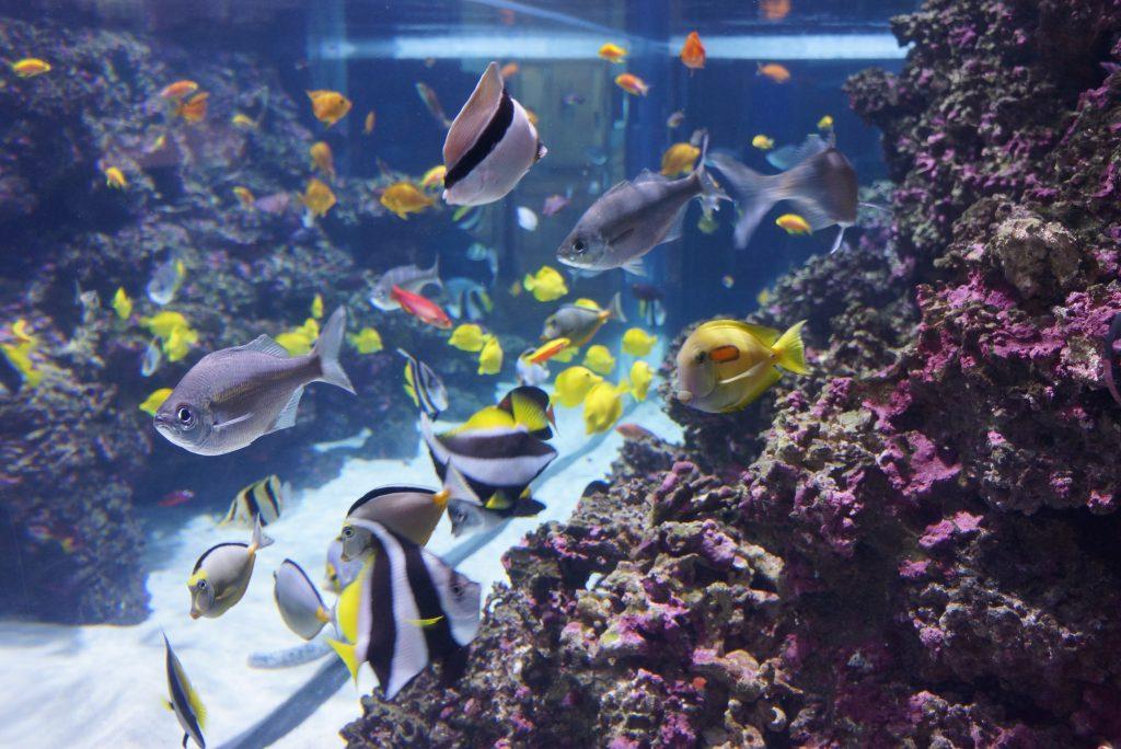 0_mokupapapa_aquarium_2_tim_brown_noaa
