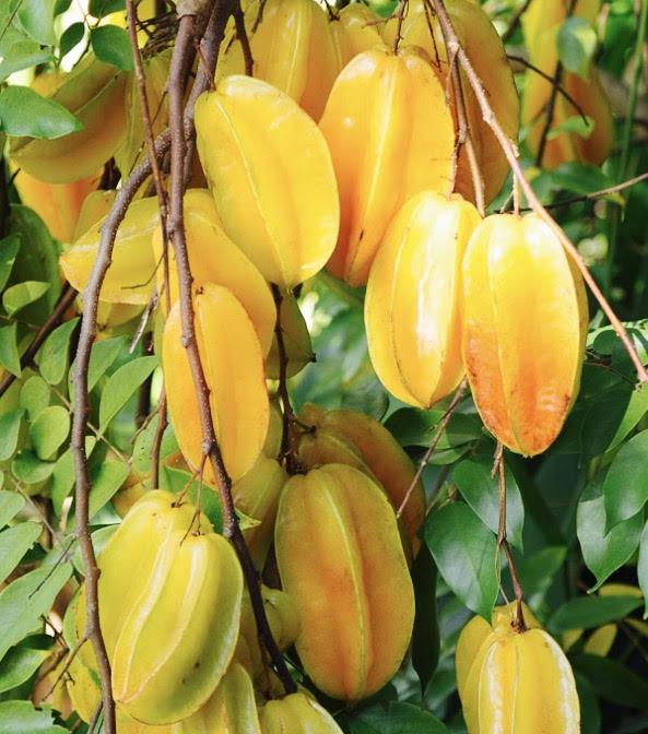 Ripe star fruit. Darde Gamayo photo.