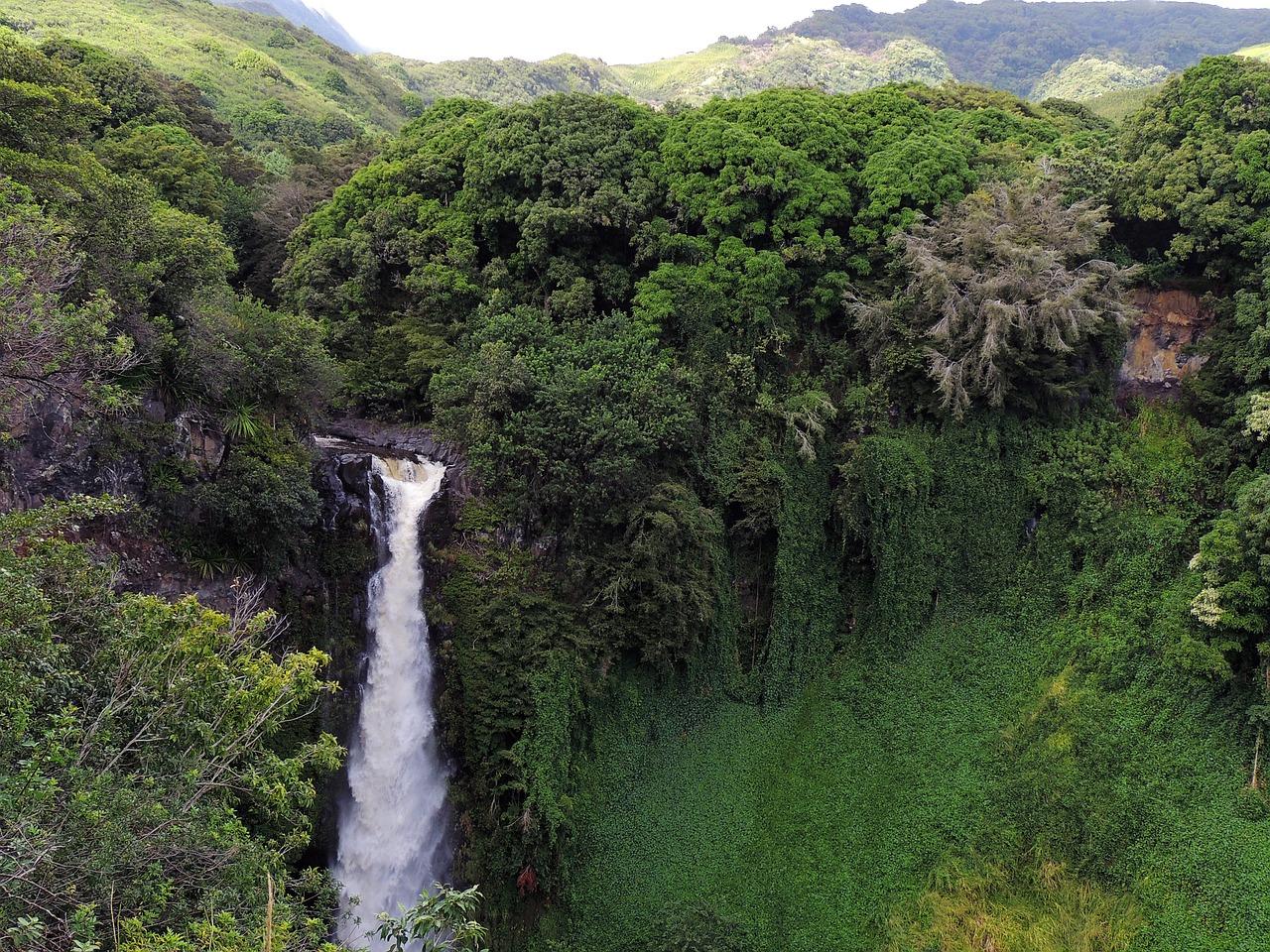 Rainforest On The Big Island: Rainforest Gardening Workshop At Volcano Art Center