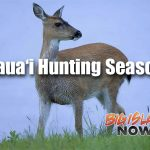 Black-Tailed Deer Season to Open on Kaua'i