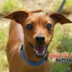 HIHS Offers More Puna Pet Information