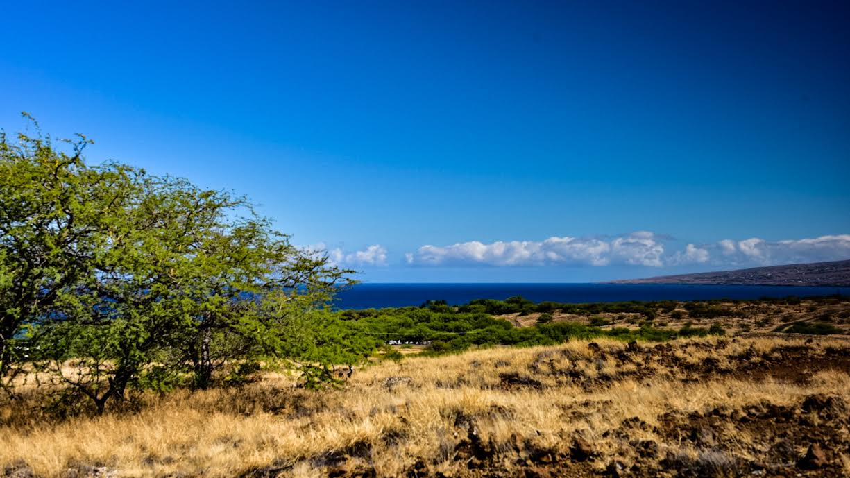 Work Trade Big Island Hawaii
