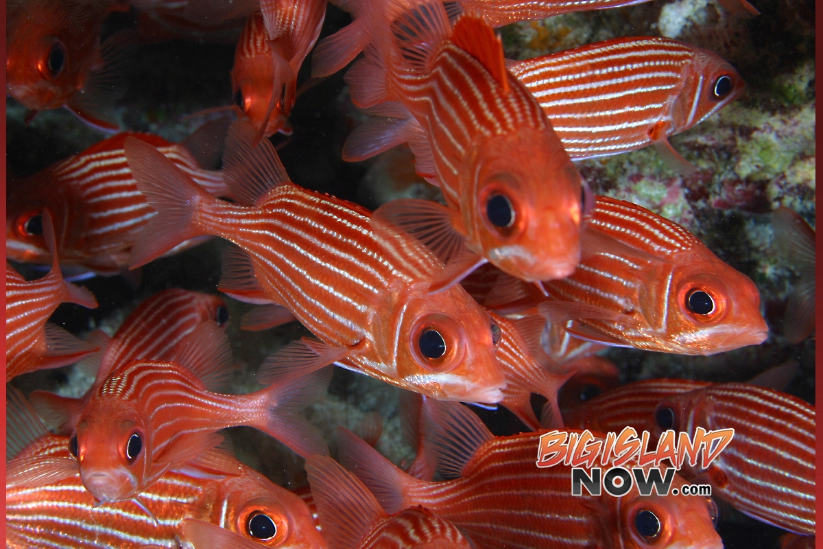 Overfishing Primary Cause of Fish Decline | Big Island Now