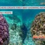 Researchers Create First Map Showing Impact on Hawai'i Reefs