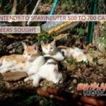Clinic Set to Spay/Neuter 500–700 Cats; Volunteers Sought
