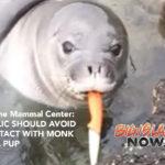 Marine Mammal Center Advises Public on Knife-Wielding Monk Seal