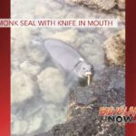 VIDEO: Monk Seal with Knife in Mouth
