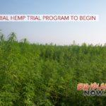 Industrial Hemp Trial Program to Begin