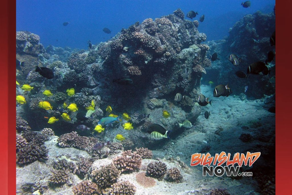 Study finds best locations to restore hawaiian reef for Hawaii reef fish