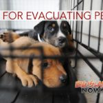 HIHS Shares Tips on Pet Evacuation