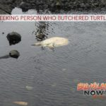 State Seeking Person Who Butchered Turtle
