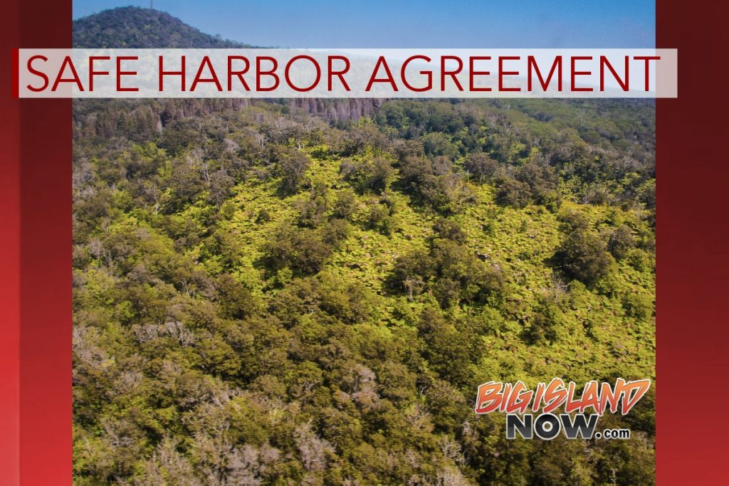 32 Endangered Species Protected Under Safe Harbor Agreement
