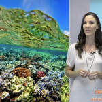 Experts Talk About Effect of Kīlauea's Current Eruption on Marine Life