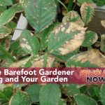 Vog and Your Big Island Garden