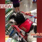 New Service Animal Law in Hawai'i