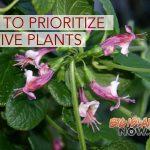 Sen. Hirono Introduces Bill to Prioritize Native Plants