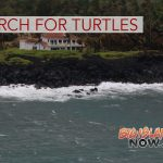 Coastline Inspected for Turtles Threatened By Lava