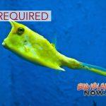 EIS Required for Commercial Aquarium Permits