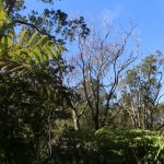 RapidʻŌhiʻaDeath Documentary to be Shown Statewide