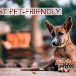REPORT: Honolulu Least Pet-Friendly Big City in US