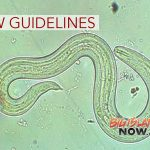 Rat Lungworm Disease Task Force Issues New Guidelines