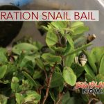 'Operation Snail Bail' Protects Rare Snails From Hurricane