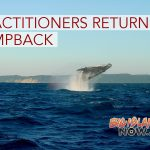 Hawaiian Practitioners Return Humpback to Ocean
