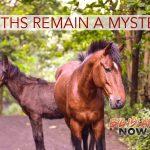 Cause of 13 Waipio Valley Horse Deaths Undetermined