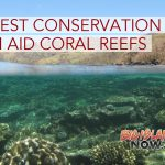 STUDY: Forest Conservation Can Aid Coral Reefs