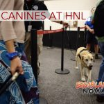 TSA Highlights Canines Role at HNL