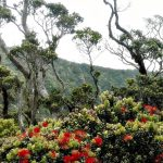 Rapid ʻŌhiʻa Death Working Group Wins Conservation Award