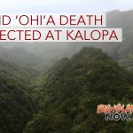 Rapid ʻŌhiʻa Death Detected at Kalōpā State Recreation Area
