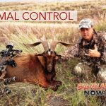 Animal Control Activities Prompt Closures on Maunakea