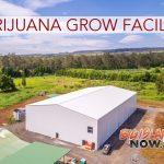 Lau Ola Marijuana Production Facility Receives 'Notice to Proceed'