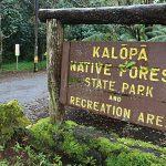 Rapid ʻŌhiʻa Death Mitigation to Begin at Kalōpā SRA