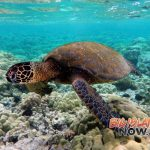 Turtles Worldwide Vulnerable Due to Climate Change, Habitat Loss