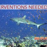REPORT: Interventions May Save Coral Reefs