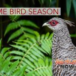 Game Bird Hunting Season Opens