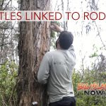 Ambrosia Beetles Linked to Rapid ʻŌhiʻa Death