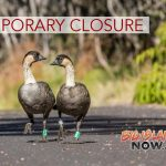 Parts of HVNP Closed Due to Breeding & Nesting Nēnē