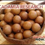 Bill Passed to Prioritize Macadamia Tree Research