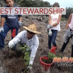 Forest Stewardship Efforts Recognized