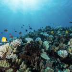Rep. Gabbard Introduces Legislation to Protect Public Health, Coral Reef