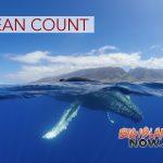 Whale Count Will Take Place Despite Government Shutdown