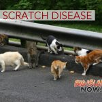 Hawai'i Keiki More Susceptible to 'Cat Scratch Disease'