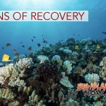 Coral Reefs in West Hawai'i Showing Signs of Recovery