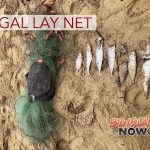 Illegal Lay Net Snares Regulated Fish & Juvenile Green Sea Turtle