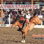 Pana'ewa Stampede Rodeo Coming Soon